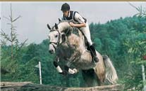 Showjumping Stallion Arcus