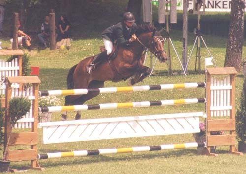 International Showjumper - Frou Frou D`anchin