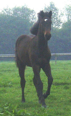 Crocodile Dundy   Z as a Yearling