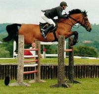 International Showjumper