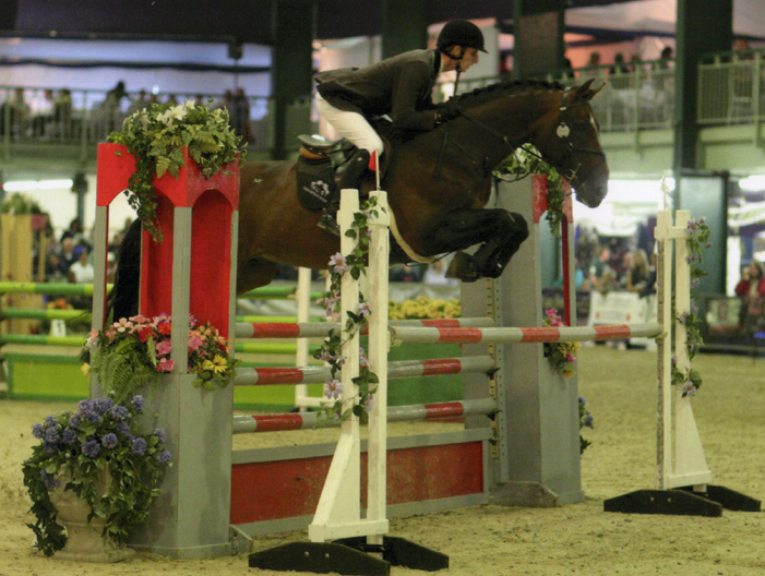 Selle Francais ShowJumping Stallion