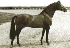 Ladykiller xx - thoroughbred breeding stallion